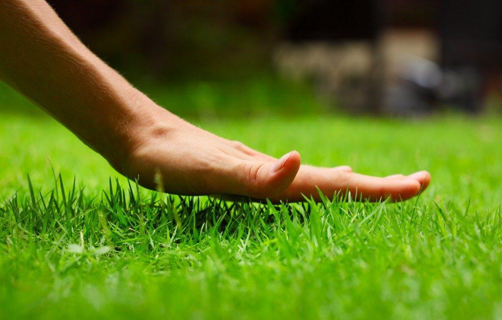 Hand above grass