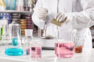 The Pharmaceutical Industry: The Process of Creating Medication